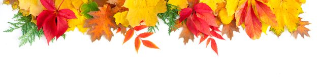 Natural fall leaves background
