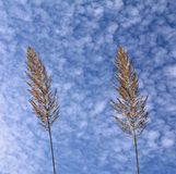 Natural feather like plant against dramatic sky Stock Image