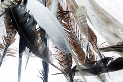 Natural feathers Royalty Free Stock Photo