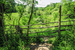 Natural fence Royalty Free Stock Image