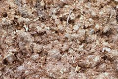 Natural fertilizer from cow dung Stock Photos