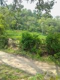 Natural filed area. In Kangra himachal beauty royalty free stock photo