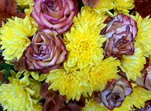Floral background with pink roses and yellow chrysanthemums Royalty Free Stock Photos