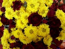 Floral background with red roses and yellow chrysanthemums Royalty Free Stock Photo