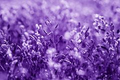Natural floral background, ultra violet concept - color of the year 2018 stock photography