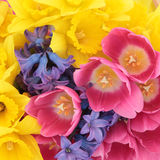 Natural Floral Beauty stock images