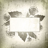 Natural Floral Frame Background Royalty Free Stock Photos