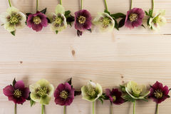Natural flower frame background with hellebore lenten rose flowers over wood Royalty Free Stock Image