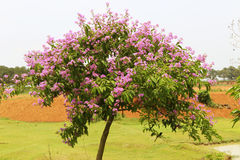 Natural flower tree Stock Image
