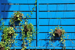 Natural flowerpots hanging with blue board. Stock Photography