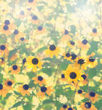 Natural flowers background. Royalty Free Stock Photography