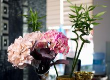 Flowers at home. Natural flowers at home close-up royalty free stock photo
