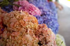 Natural flowers in pastels tones, floral bouquets at florist shop. royalty free stock images