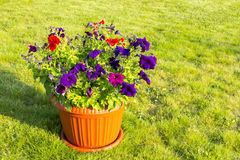 Natural flowers in pot outside Royalty Free Stock Photos