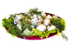 Natural food. Natural Field mushrooms, Fennel and Salad Royalty Free Stock Images