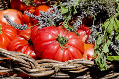 Natural food, tomatoes Royalty Free Stock Images