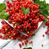 Natural Foods, Berry, Fruit, Currant stock photography