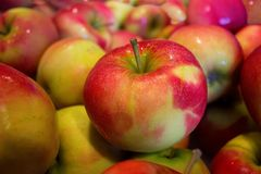 Natural Foods, Fruit, Apple, Local Food Royalty Free Stock Photography