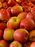 Natural Foods, Fruit, Local Food, Apple Royalty Free Stock Photography