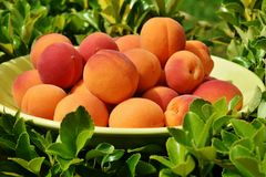 Natural Foods, Fruit, Local Food, Produce Stock Photo