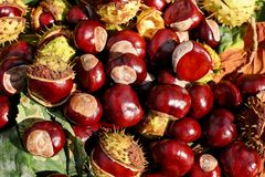 Natural Foods, Fruit, Local Food, Vegetable royalty free stock image