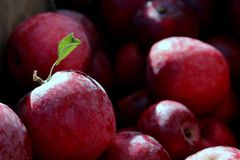 Natural Foods, Fruit, Produce, Local Food royalty free stock photography