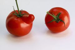 Natural Foods, Vegetable, Plum Tomato, Tomato