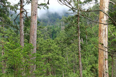 Natural forest. Stock Photo