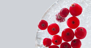 Natural forest cranberry frozen in piece of ice. Cranberries berries macro view. copy space, gray background. Stock Image