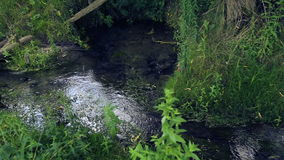 Natural forest creek.Spring-water source, a spring.Environmentally friendly water. stock footage