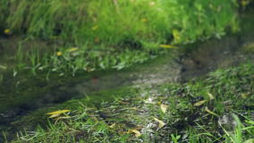 Natural forest creek.Spring-water source, a spring.Environmentally friendly water. stock video