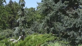 Natural forest landscape. With coniferous and deciduous trees video footage stock footage