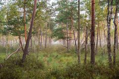 Natural forest landscape. Swamp and trees, rich Lithuanian nature royalty free stock photo