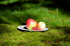 Natural forest moss picnic food Royalty Free Stock Photo