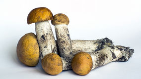 Natural forest mushrooms Stock Images