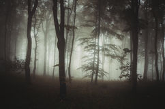 Natural forest with mysterious fog in autumn Royalty Free Stock Photography