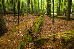 Natural forest Stock Images