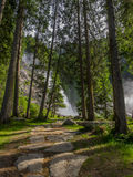 Natural Forest. A natural picture of a forest with a waterfall in the background background- austria Royalty Free Stock Photos