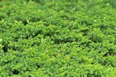 Natural forest and plants background in close up stock image