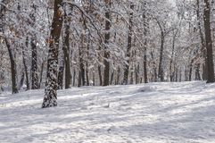 Natural forest snow winter season travel background park. Landscape Royalty Free Stock Photos