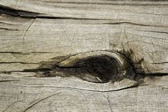 Natural formation similar to the human eye in the trunk. Of a cut wood royalty free stock photo