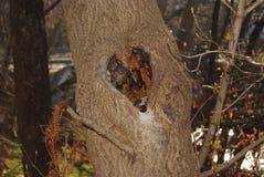 Natural formed Heart. A natural formed heart in the bark of a tree Stock Image