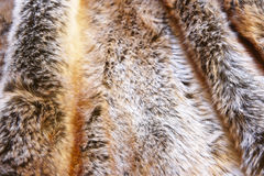 Natural fox furry background. Animal game Stock Images