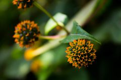 Natural Fractals Flower. Natural shoot orange colored flower into the mountains stock image