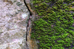 Natural fractured stone and moss in forest Royalty Free Stock Image