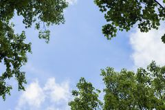 Natural frame, background of blue sky and green leaves, spring, summer. Place for text. Natural frame, background of a blue sky with white clouds and green Stock Image
