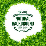 Natural frame of fresh green spring leaves. Surrounding a central copyspace with a white background and editable text in square format, vector illustration Stock Photography