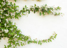 Natural frame of jasmine flowers on white wall Stock Images