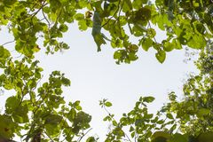 Frame of leaves and sky Royalty Free Stock Photo