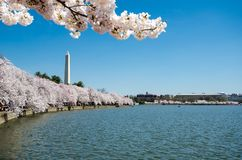 Natural frame with Pink Cherry blossom flowers trees at Tidal Basin. Natural frame with Pink Cherry blossom flowers trees on the Washington DC Tidal basin with stock image